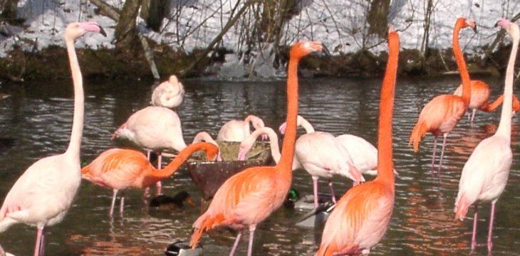 01.03.2000 – ein kleiner Ausflug in den Tierpark